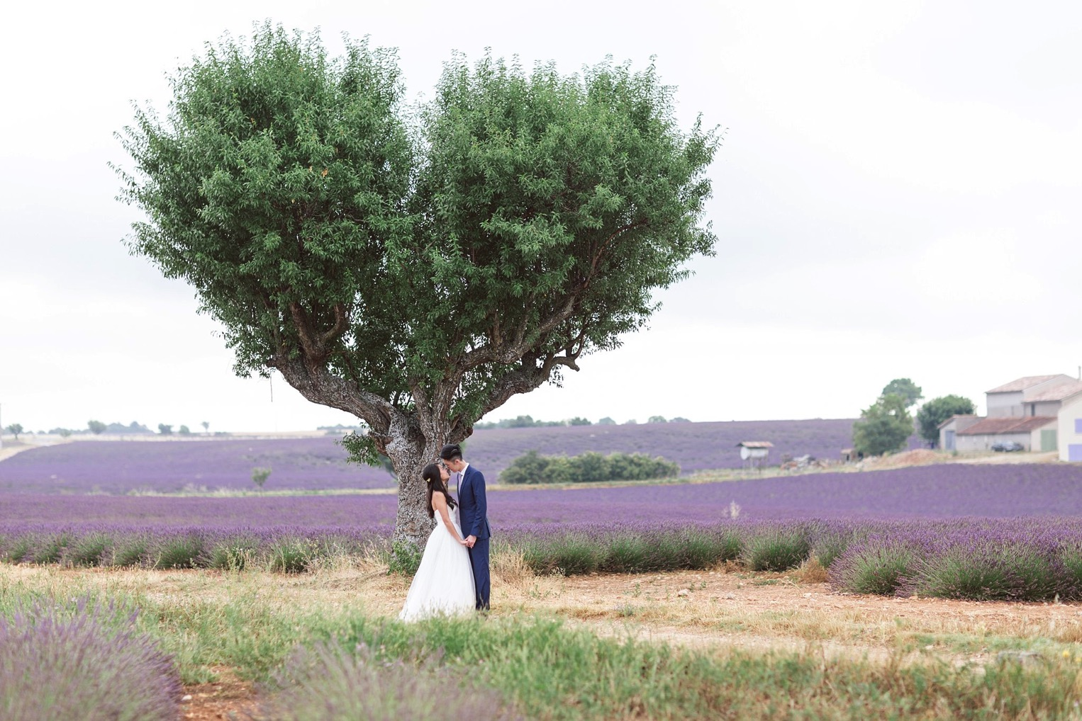 Provence Lavender French Grey Photography 103