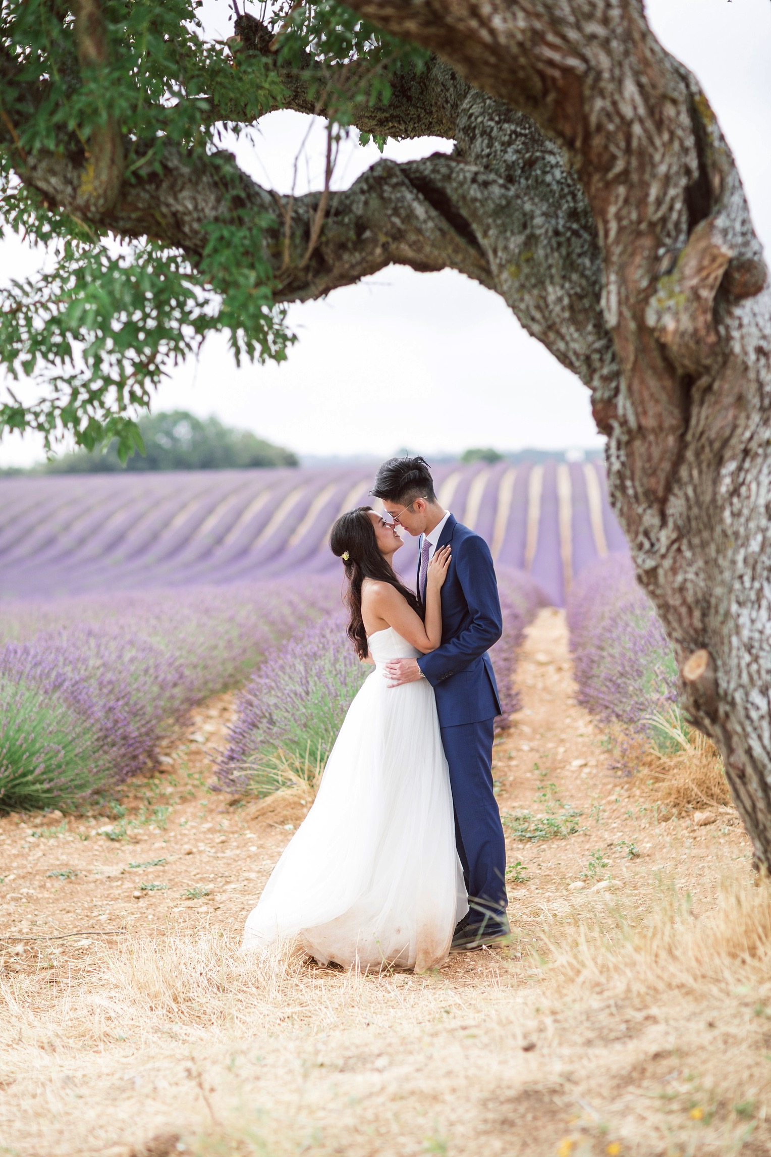 Provence Lavender French Grey Photography 107