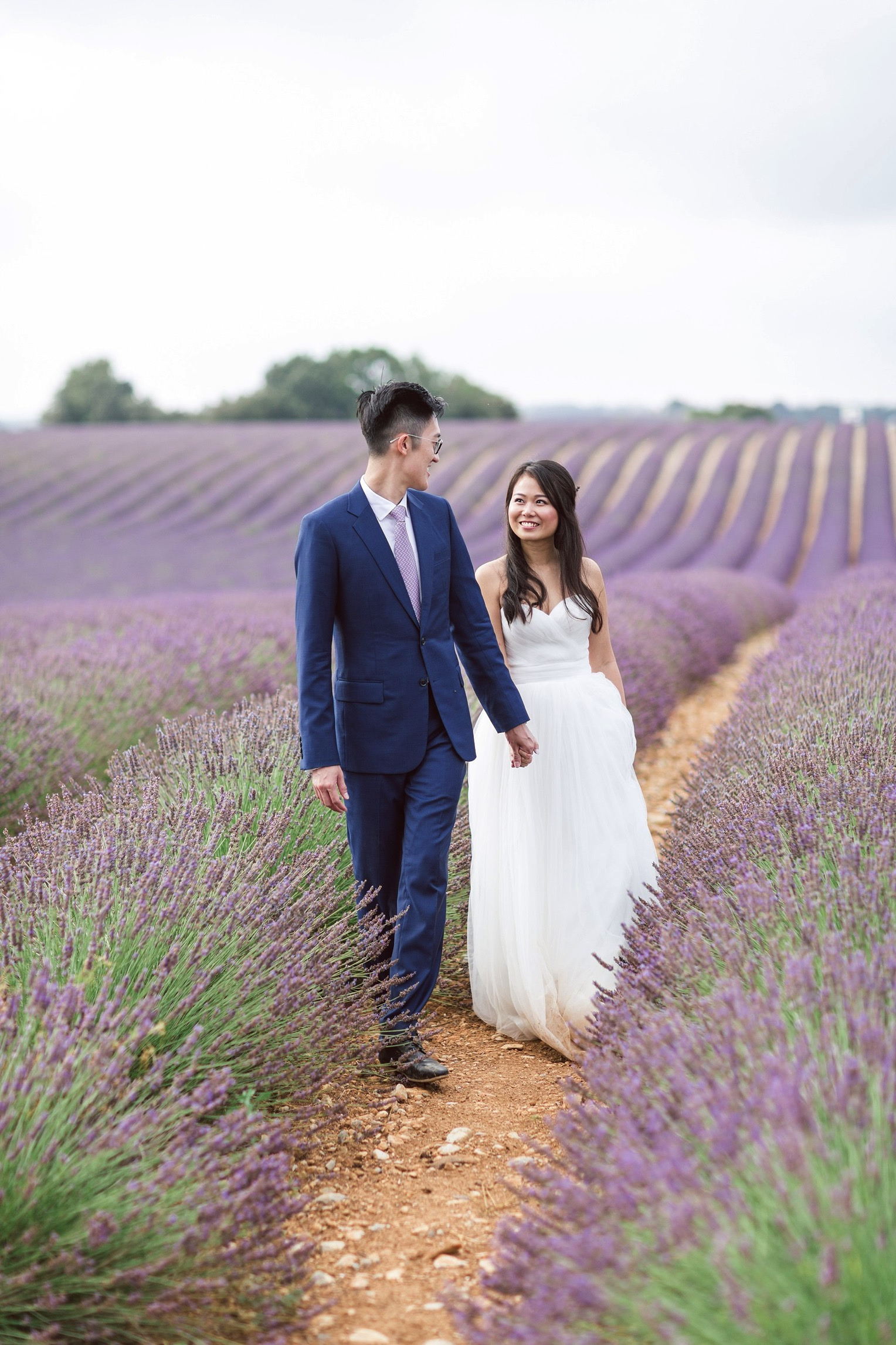 Provence Lavender French Grey Photography 111