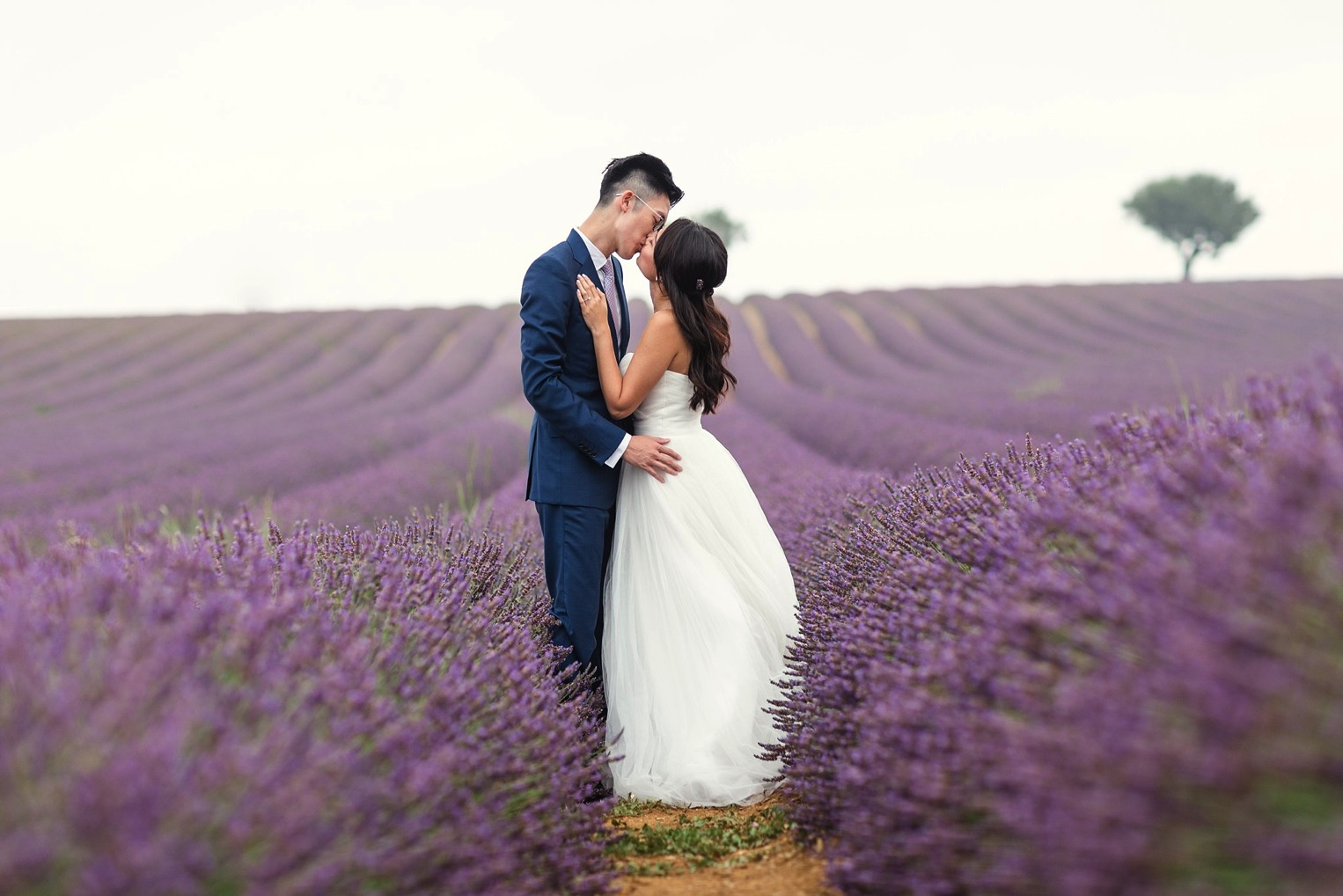Provence Lavender French Grey Photography 22