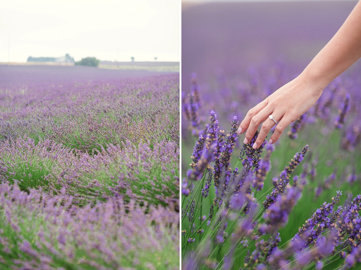 Provence Lavender French Grey Photography 33