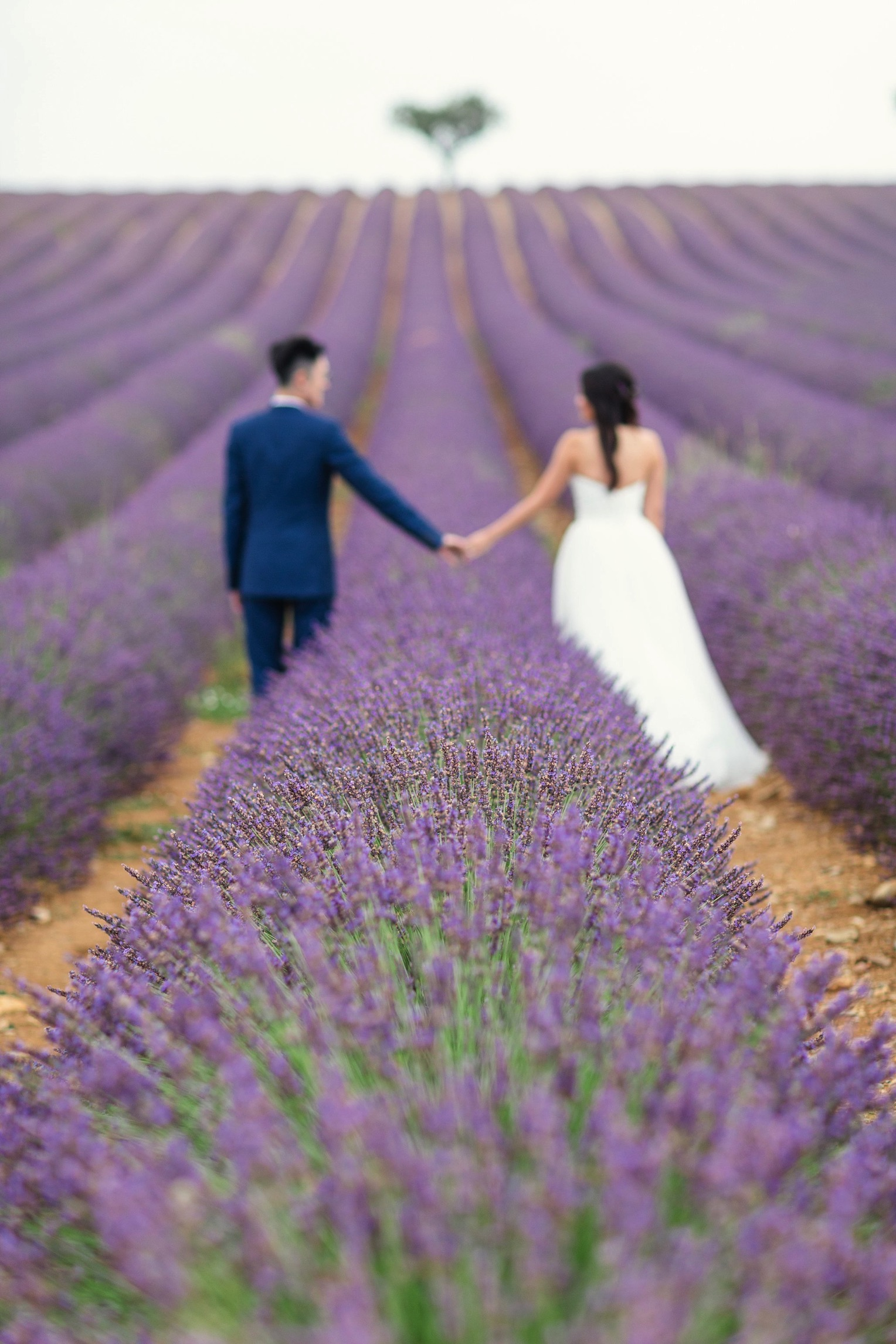 Provence Lavender French Grey Photography 37