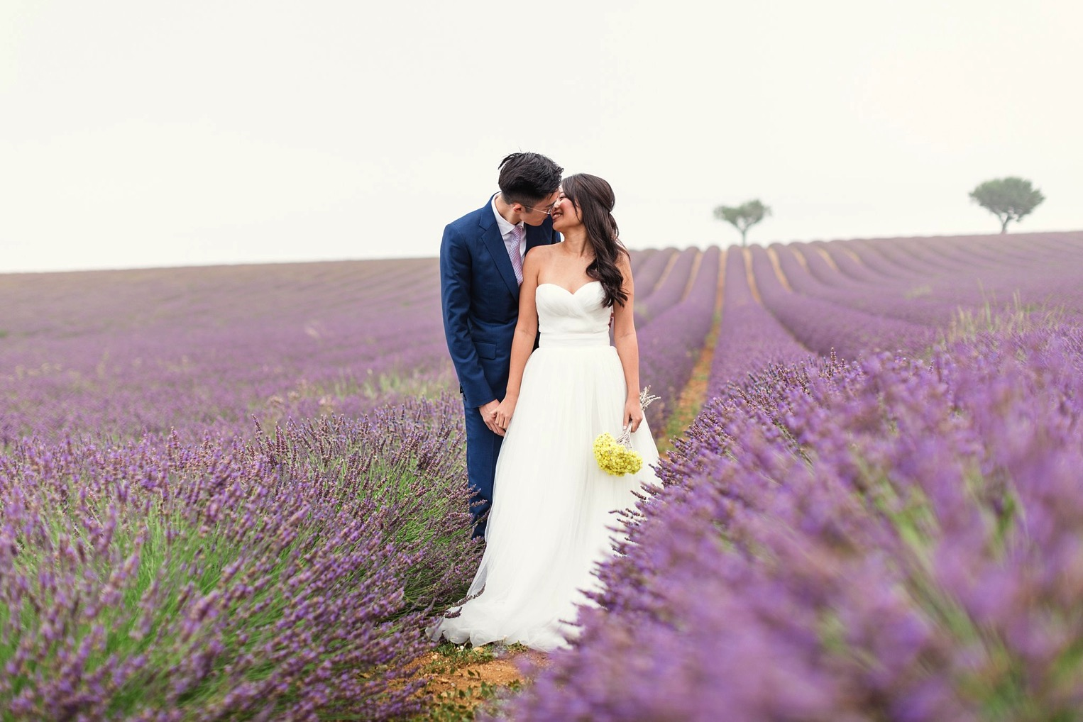 Provence Lavender French Grey Photography 4