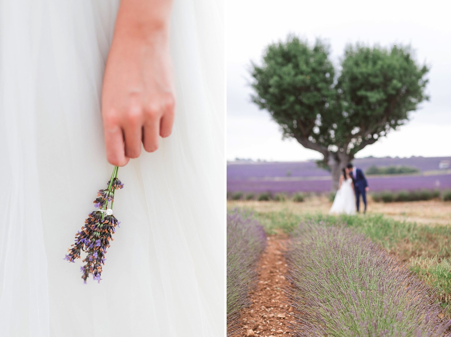 Provence Lavender French Grey Photography 85